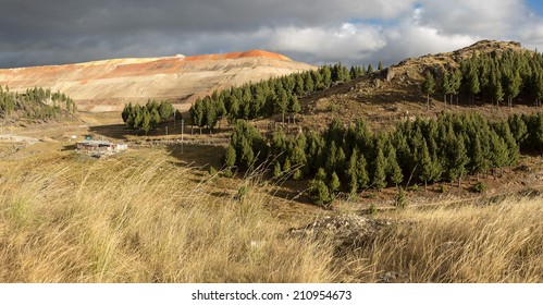 CAJAMARCA, PERU: Yanacocha mine and pines wood.