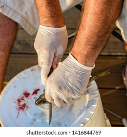 A Cajun man is cleaning the fish he just caught with a fish fillet knife on a bucket while wearing gloves at a location near a freshwater pound in Louisiana.