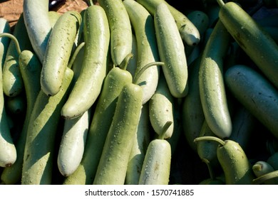 Calabash or White-Flowered Gourds for Selling in an Indian Vegetables Market