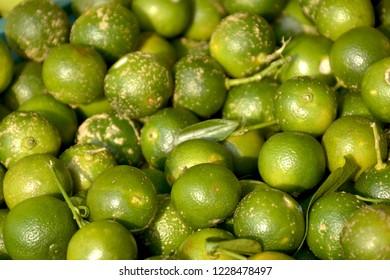 Calamondin or calamansi citrus fruit in the Philippines.