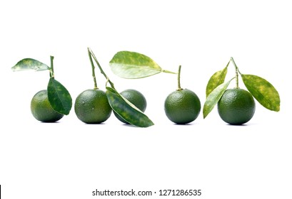 Calamondin or calamansi lime on white background