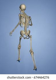 Calcaneus, 3D Model