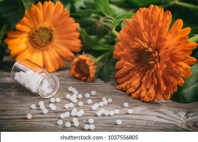 Calendula alternative medicine. Fresh blooming calendula, pot marigold and white homeopathy pills on a wooden table