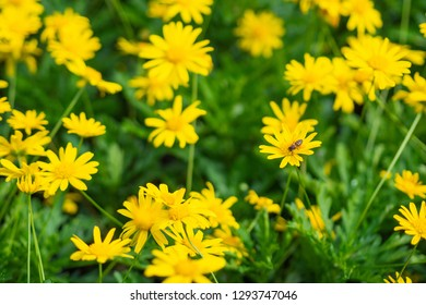 Calendula arvensis is a species of flowering plant in the daisy family known by the common name field marigold.