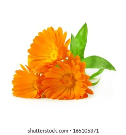 Calendula flowers isolated on white background
