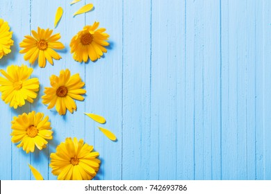 calendula flowers on blue wooden background