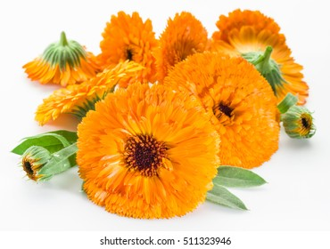 Calendula flowers on the white background.
