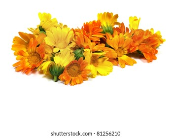 calendula flowers on a the white background