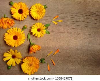 Calendula. Marigold flower leaf top view on wooden background. Calendula cup (Marigold flower) leaf natural summer flower. Calendula officinalis medicinal plant petals & herb leaves - healthy concept