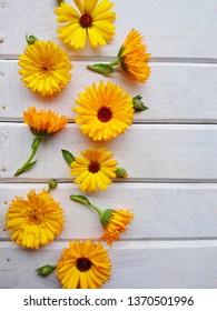 Calendula. Marigold flower leaf top view on white wooden background. Calendula cup (Marigold flower) leaf natural summer flower. Calendula officinalis medicinal herb plant petals - healthy concept