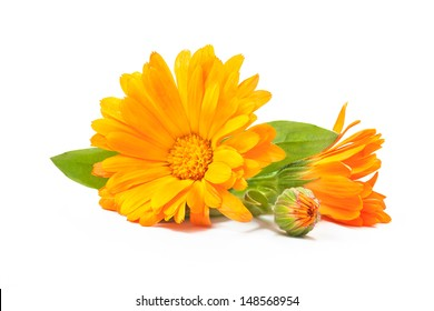 Calendula. Marigold flowers with leaves isolated on white background