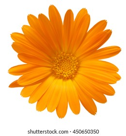 Calendula officinalis flowers. Clipping path, infinite depth of field