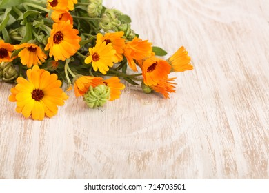 Calendula officinalis. Marigold flower with leaf on white wooden background with copy space for your text