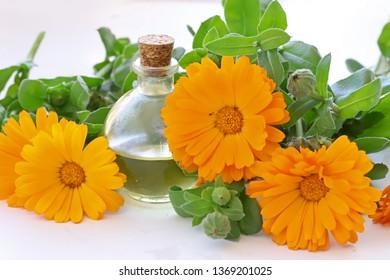 calendula oil ; Celendula Officinalis