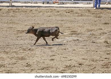 Calf Escape