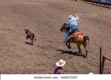 Calf Roping at a Rodeo, A cowboy wearing a blue checked shirt and white hat swings a lasso as he chases a calf. He is in a rodeo. He rides on a roan horse. A cowboy watches.