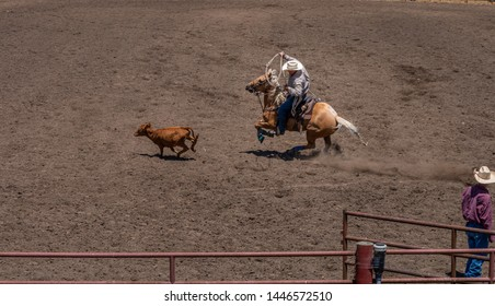 Calf Roping at a Rodeo, A cowboy wearing a tan shirt and white hat swings a lasso as he chases a calf. He is in a rodeo. He rides on a blond horse rearing up on its back legs. A cowboy watches.