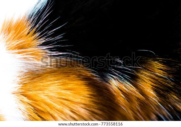 Calico Cat Fur Background