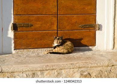 Calico cat lying in front of an orange wood door in Vieste, Italy