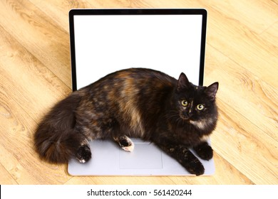 Calico cat is lying on laptop keyboard. Display glowing white.