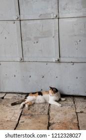 Calico cat resting beside Jerusalem's Jaffa gate