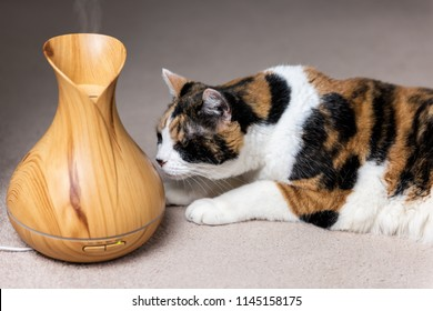 Calico cat sniffing smelling wooden bamboo essential oil diffuser health object wellness