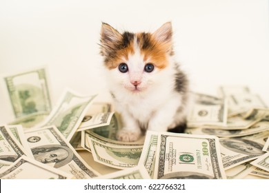 Calico Kitten with Money