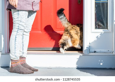 Calico maine coon cat running inside to house, home outside with owner, person, woman opening red door, standing outdoors