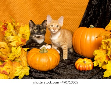 A calico and and orange tabby kitten sit among pumpkins and fall leaves.