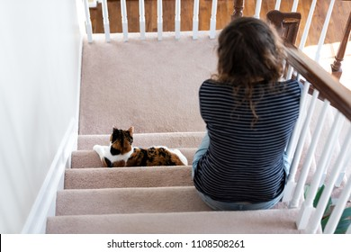Calico white and ginger cat sitting on carpet stairs inside indoor home hallway lying down by young woman owner back looking down