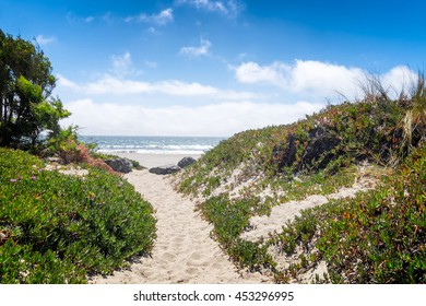 California beach sand path through dunes and ice plant on a sunny day. View of the ocean. Location: Stinson Beach north of San Francisco. Focus is on the foreground vegetation.