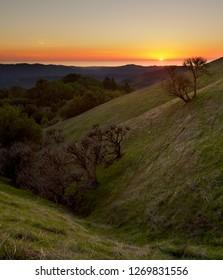 California Buckeye Trees in Santa Cruz Mountains, Pacific Ocean at Sunset in Background