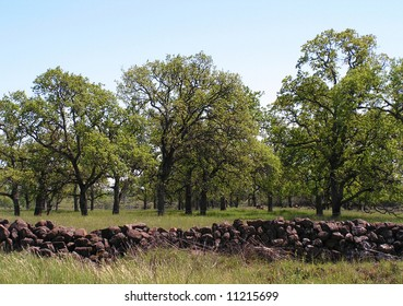 The California central valley. Fields of lush green grass, cat-tails, farmland, marsh and creeks. Rock wall and oak trees.