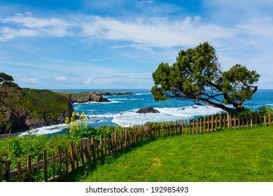 California Coast in Mendocino