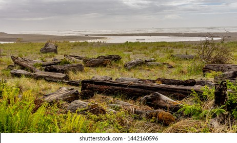 California coast on a stormy spring afternoon; driftwood in the foreground and dark clouds in the distance with heavy fog. Image taken near the Prairie Creek Redwood State Park