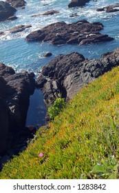 California coast in springtime