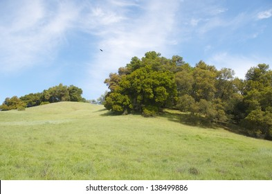 California hillsides in spring