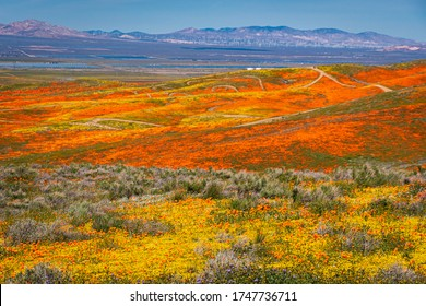 California iconic poppy field: Antelope Valley California Poppy Reserve State Natural Reserve, the wildflower bloom generally occurs from mid-March through April The orange and yellow California poppy