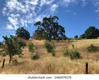 California landscape with oak tree and golden grass