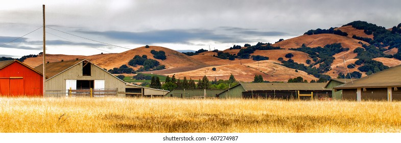 California landscape panorama with rolling golden hills, native oak trees, green vineyards, grazing ranch land and farm buildings.  Location: wine country region of Sonoma and Napa valley.