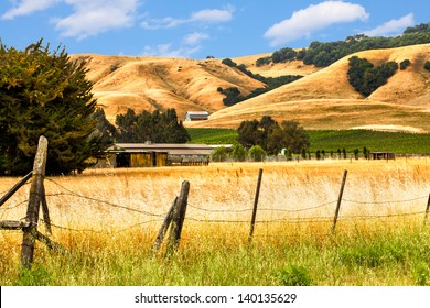 California landscape with rolling golden hills, oak trees and green vineyards.  Location: wine country region of Sonoma and Napa valley.