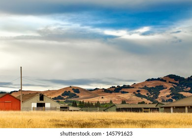 California landscape with rolling golden hills, native oak trees, green vineyards and grazing ranch land.  Location: wine country region of Sonoma and Napa valley.