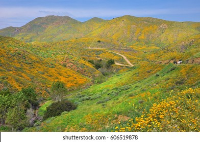 California mountains covered in colorful poppies