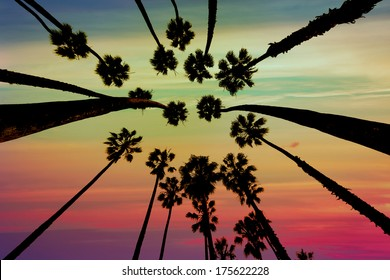California Palm trees view from below in Santa Barbara US [photo illustration]