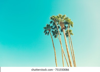 California palm trees in vintage style. retro