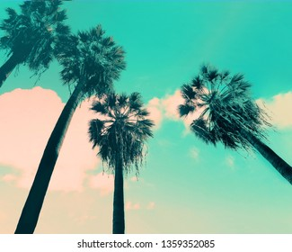 California palms on a blue sky.  Beautiful summer vibes in Los Angeles.