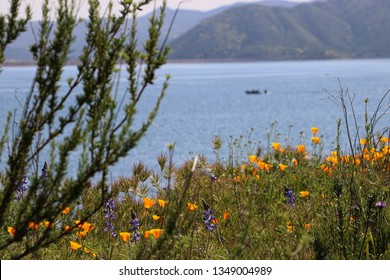 California poppies bloom near a blue lake and distant hills