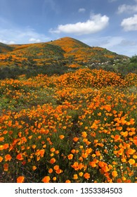 California Poppies during Superbloom in Southern California