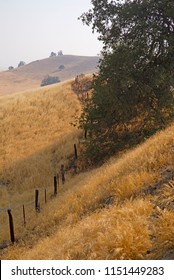 A California ranch fence line meanders among dried grass and black oak trees in the foothills of the Sierra Nevada Range.