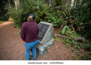 California Redwoods National Park, CA - November 20, 2018: Hiker reads a sign along the trail at the Lady Bird Johnson Grove Trail in the California Redwoods.